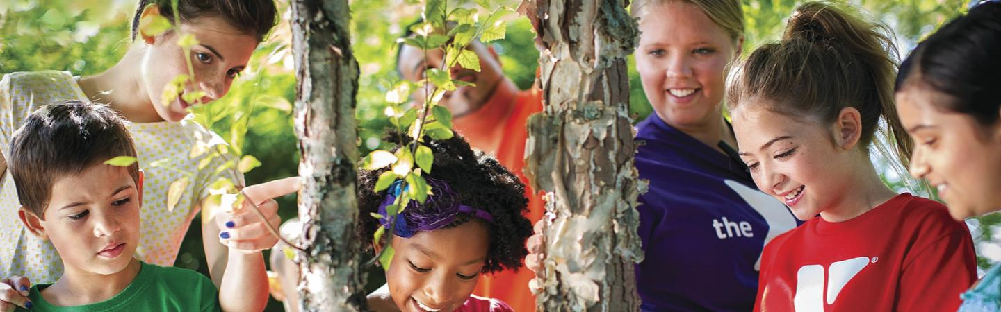 Children on playground looking at a tree.